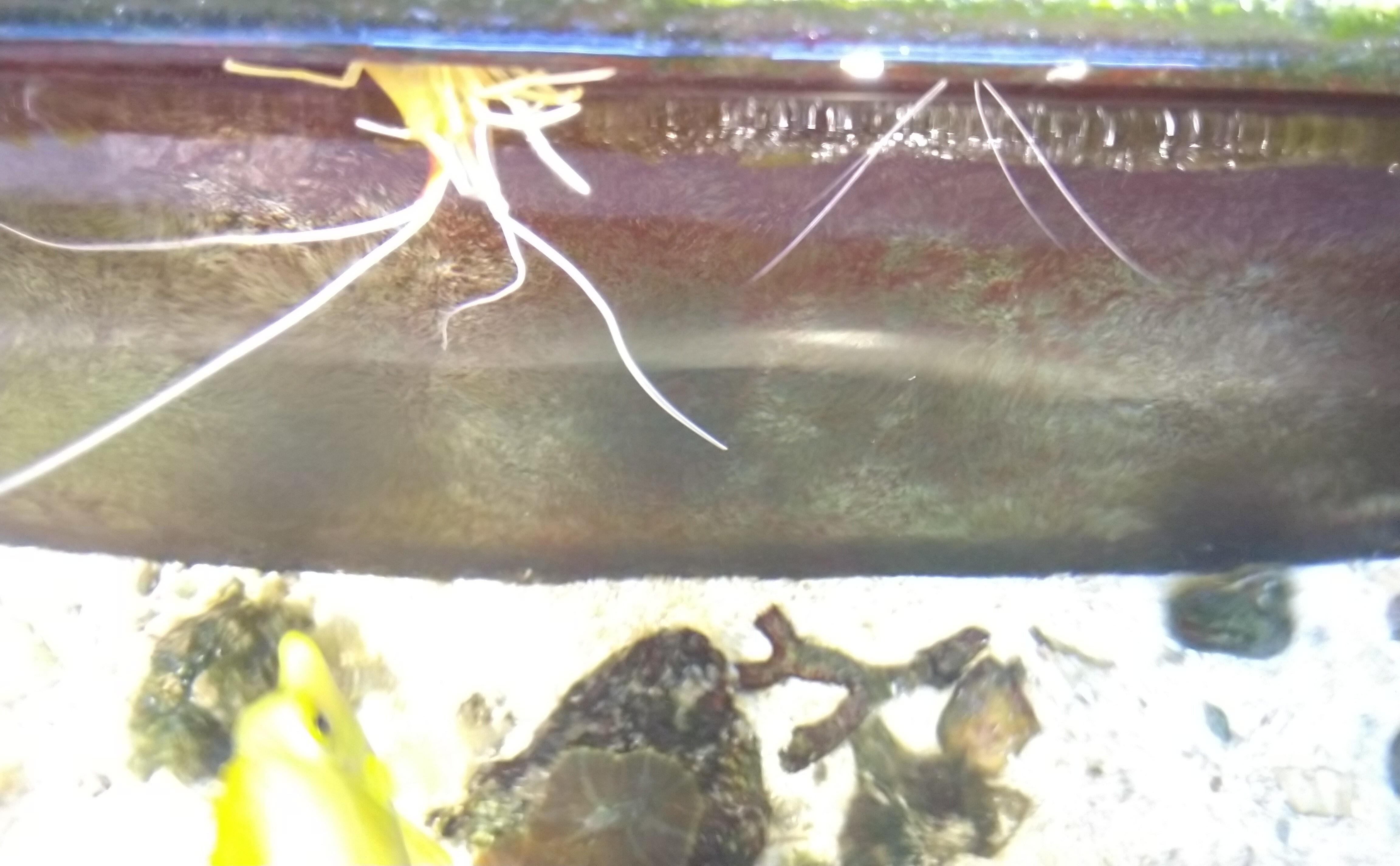 PhD**** в морском аквариуме-2