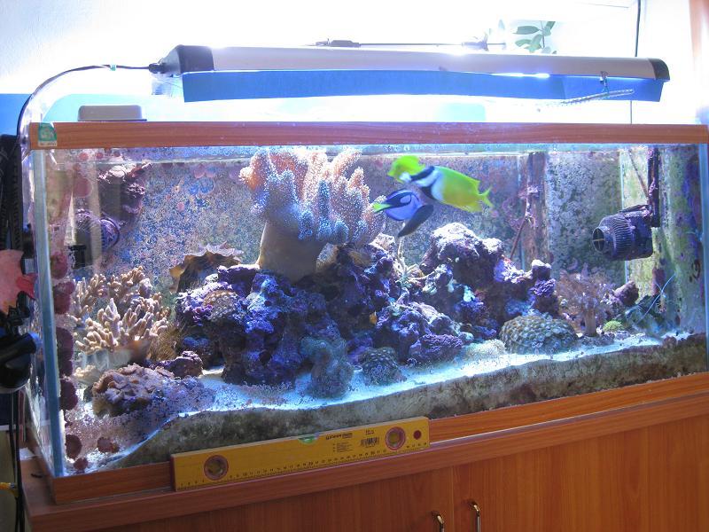 Мое вИдение аквариумовЕдения или как пишут статьи