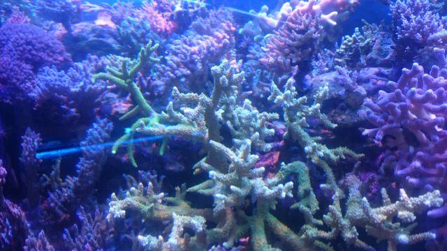2 кубометра рифа