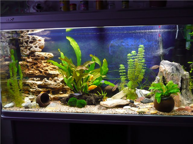 Камни аквариума своими руками фото
