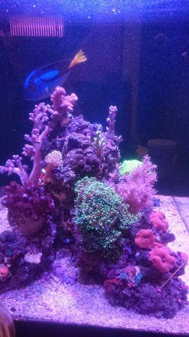 Морской аквариум на 120 л начало