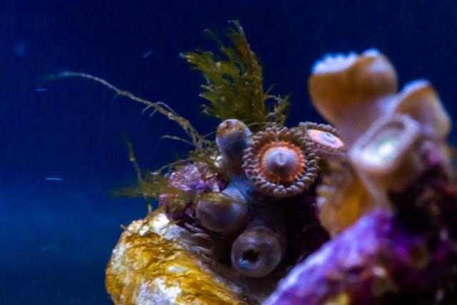 OOley Sea aqwa Web 8647