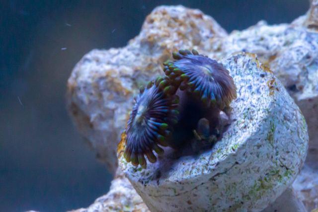 OOley Sea aqwa Web 8724