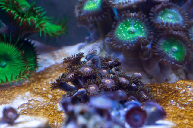 OOley Sea aqwa Web 8677
