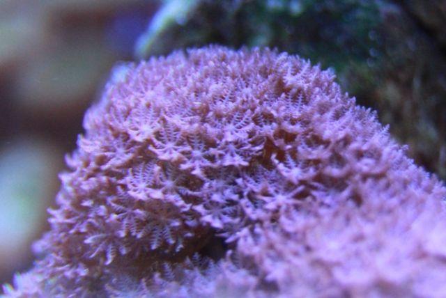 .....почти тонна рифа,800л рыбник..... - Страница 5 Med_gallery_396_57_168301