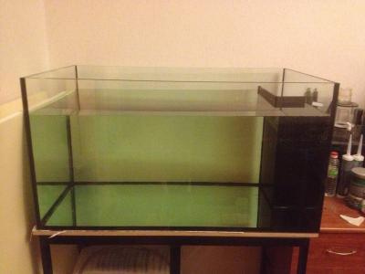 аквариум 012.jpg