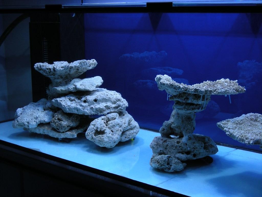 тарт камни для аквариума фото адаптировались различным