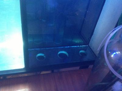 аквариум 009.jpg