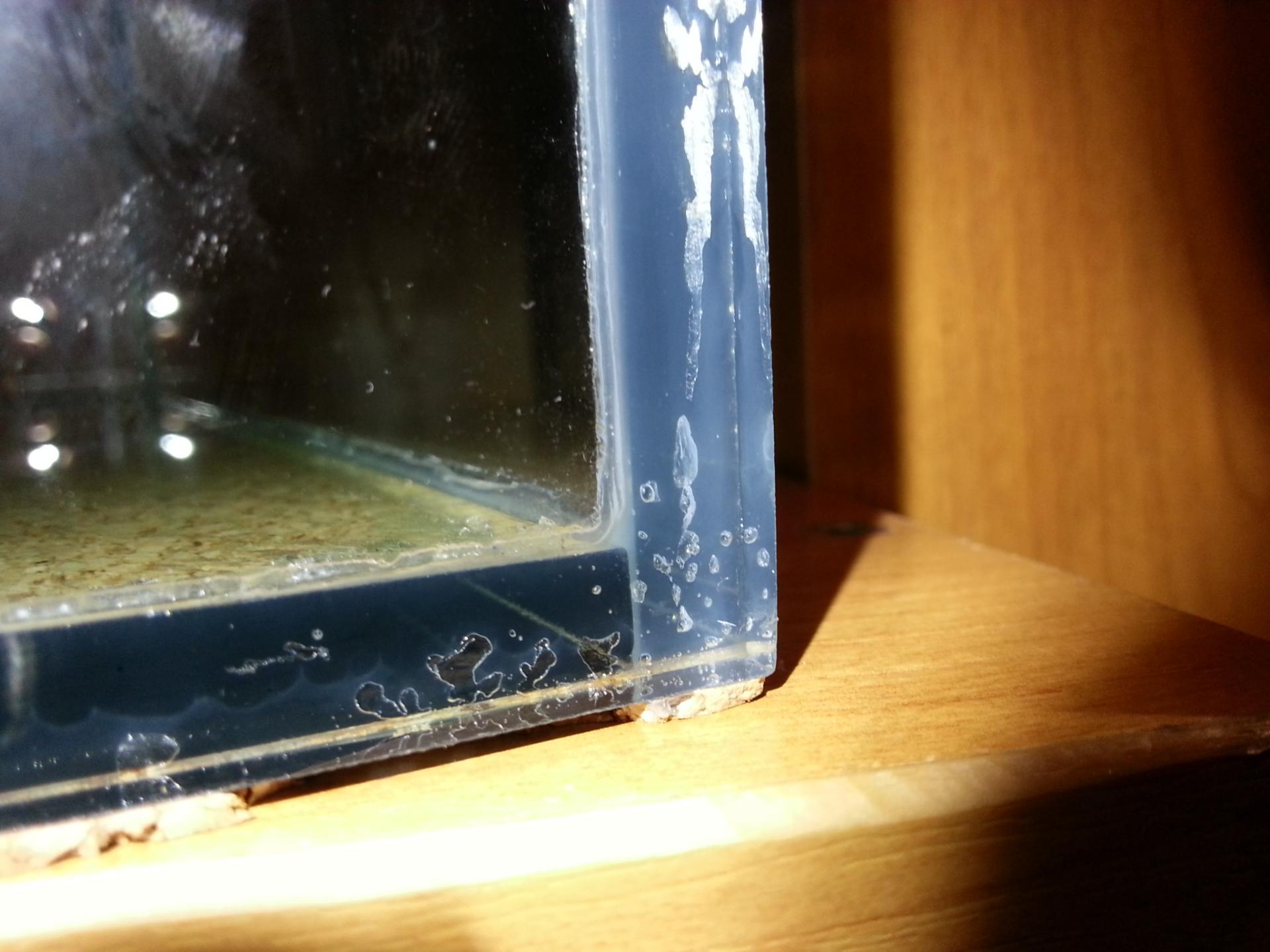 симпатичную протечка аквариума фото большой