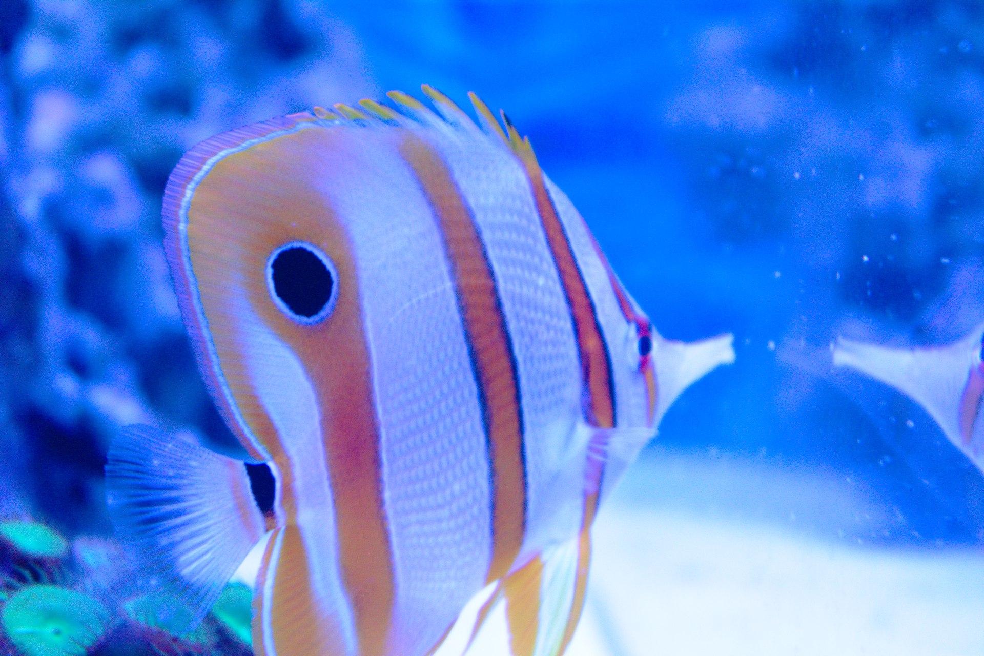 давление падает рыба клюет