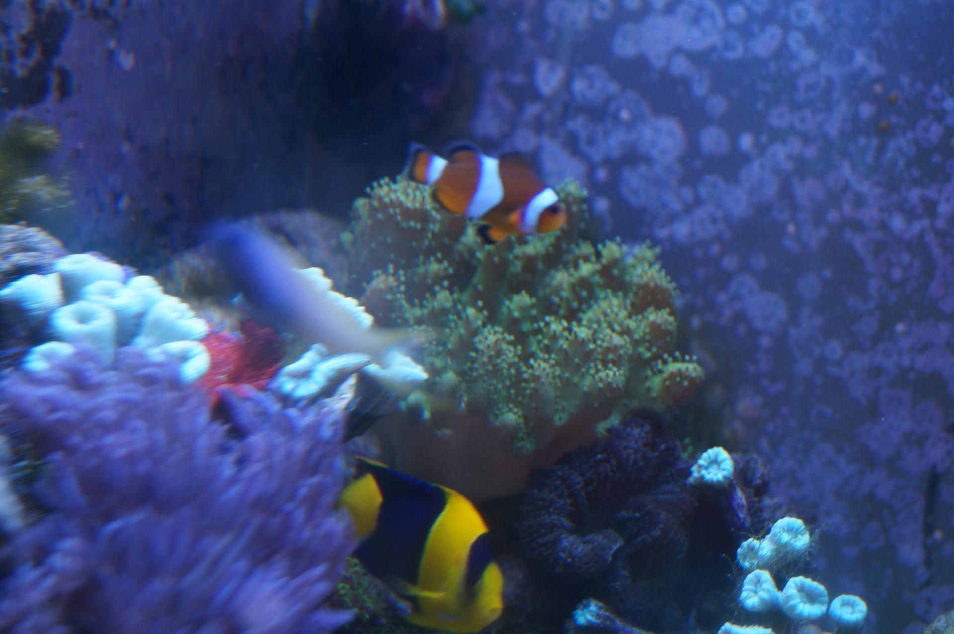 кораллы камни фото
