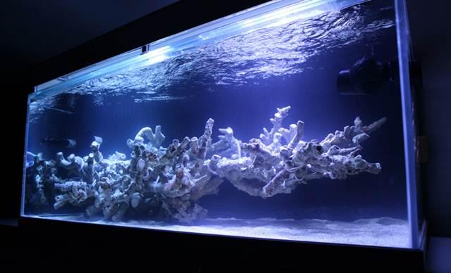 Сделать риф для аквариума