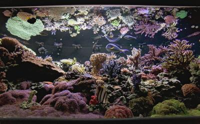 Dec.-Reeftank-WA-3.jpg