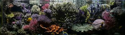 My-reef.jpg