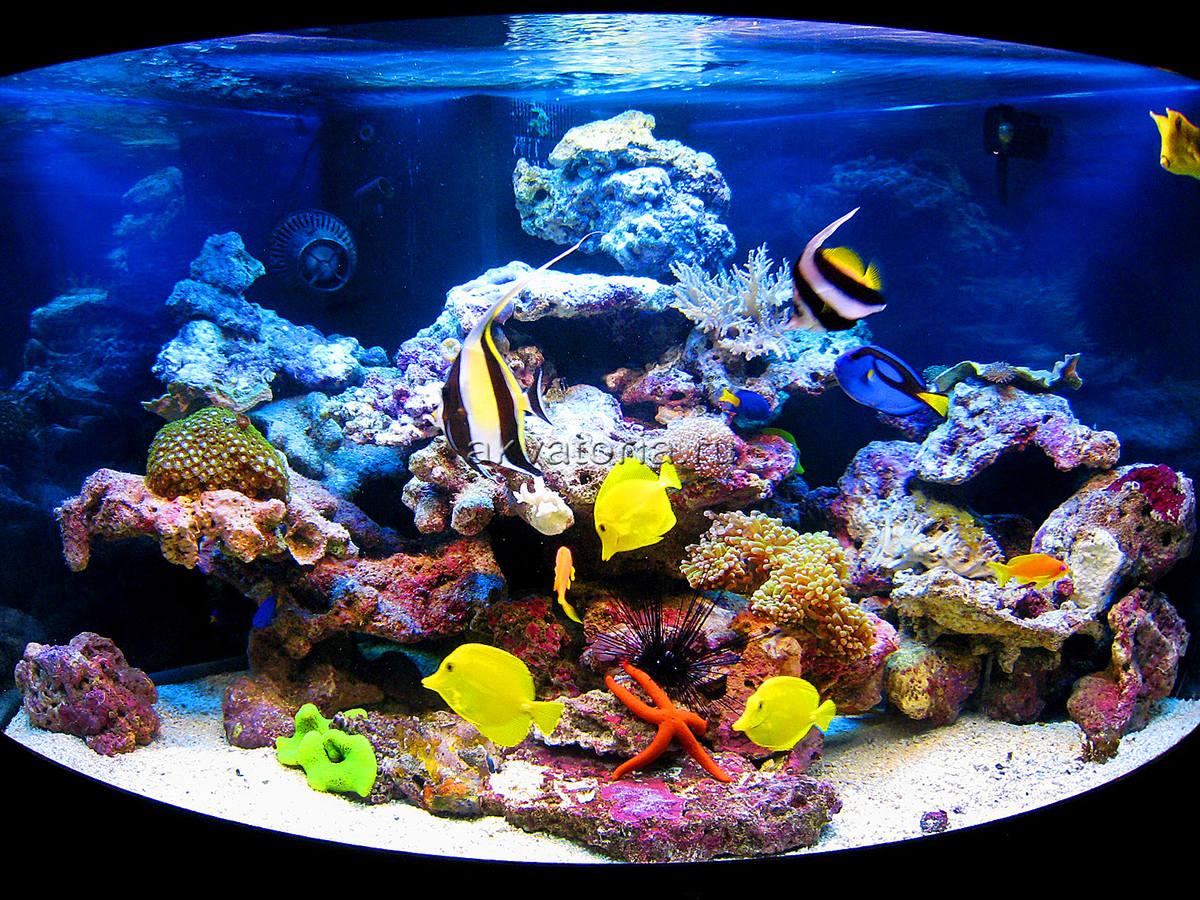 самп рифа фото