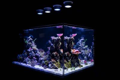 Ecoxotic-Photon-Cannon-over-Reef-Tank.jpg