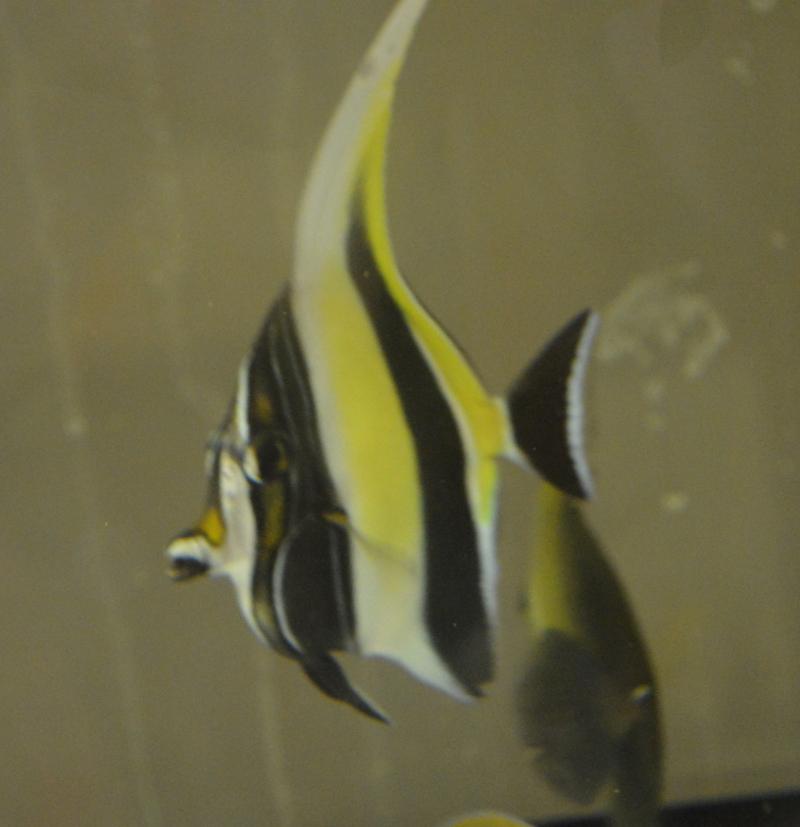 морская еж фото