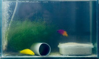 Fish_in_quarantine_0753w.jpg