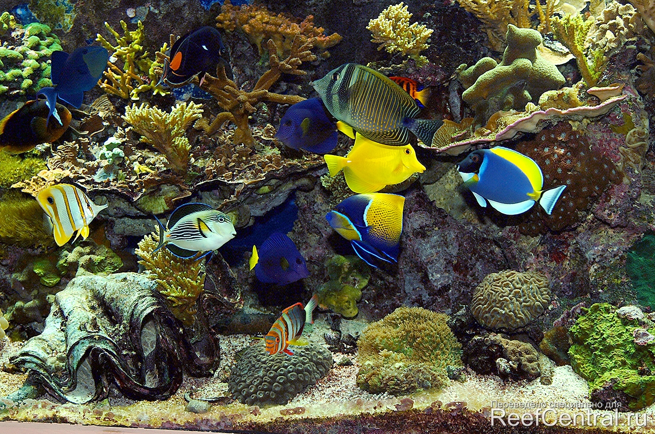 желтые рыбы фото