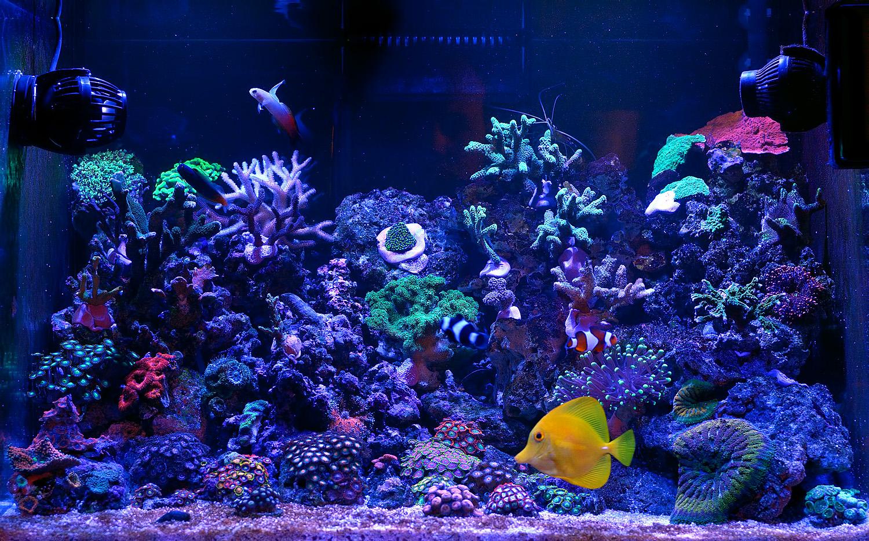 фото рифа в самп