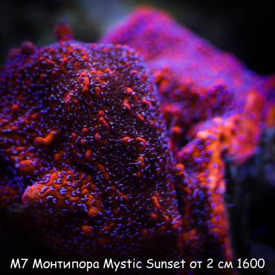М7 Монтипора Mystic Sunset от 2 см 1600.jpg