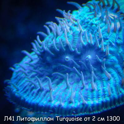 Л41 Литофиллон Turquoise от 2 см 1300-2.jpg