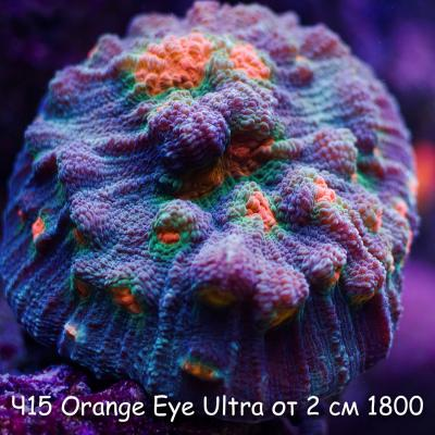 Ч15 Чалис  Orange Eye Ultra от 2 см 1800.jpg