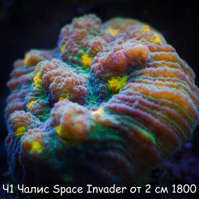 Ч1 Чалис Space Invader от 2 см 1800-2.jpg