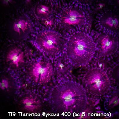 П9 Палитоя Фуксия 400 (за 5 полипов).jpg