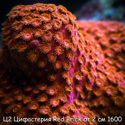 Ц2 Цифастерия Red Brick от 2 см 1600.jpg