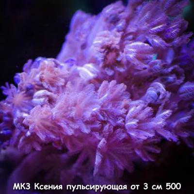 МК3 Ксения пульсирующая от 3 см 500.jpg