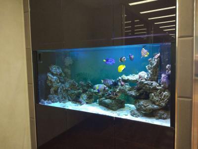 аквариум красивый.JPEG