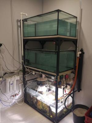 аквариум стремный полностью.JPEG