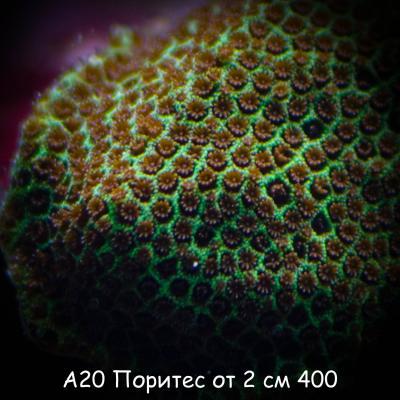 А20 Поритес от 2 см 400.jpg