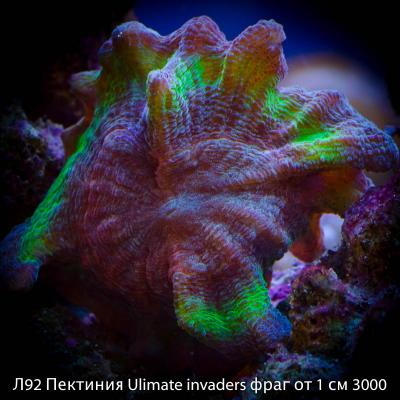 Л92 Пектиния Ulimate invaders фраг от 1 см 3000.jpg