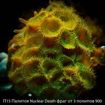 П15 Палитоя Nuclear Death фраг от 3 полипов 900.jpg