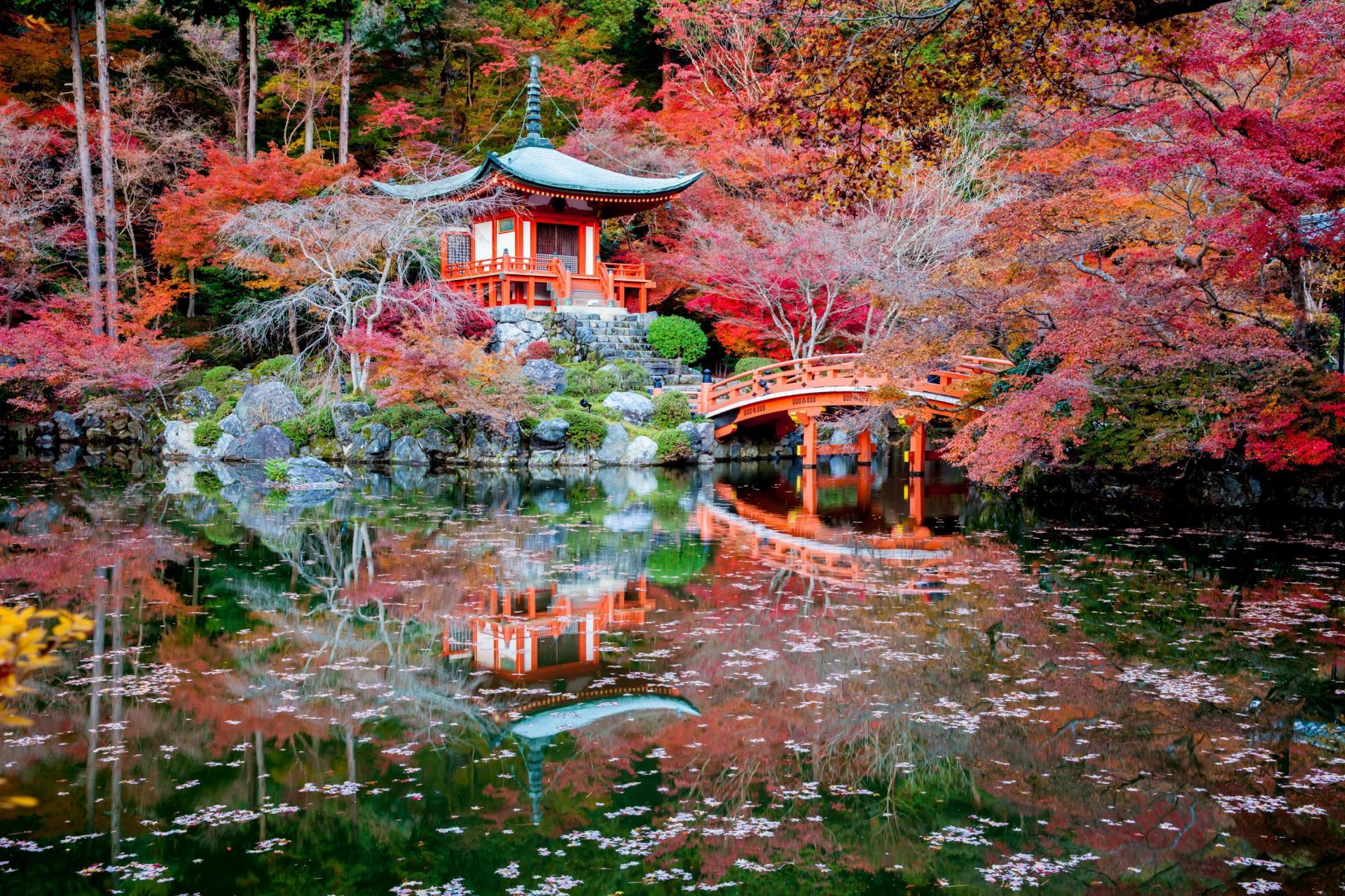 Японский сад москва 19 фотография