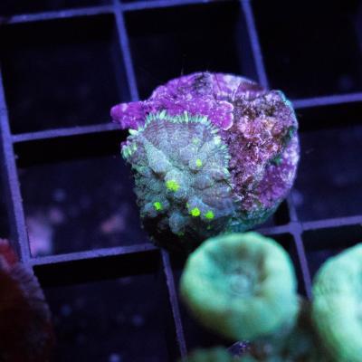 127 Uranium Bounce 5000 - 3500.jpg