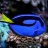"""Домашний риф """"Погружение"""" на 450+200л - последнее сообщение от Anthonydepalma"""