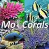 Поступление кораллов - последнее сообщение от MosCorals