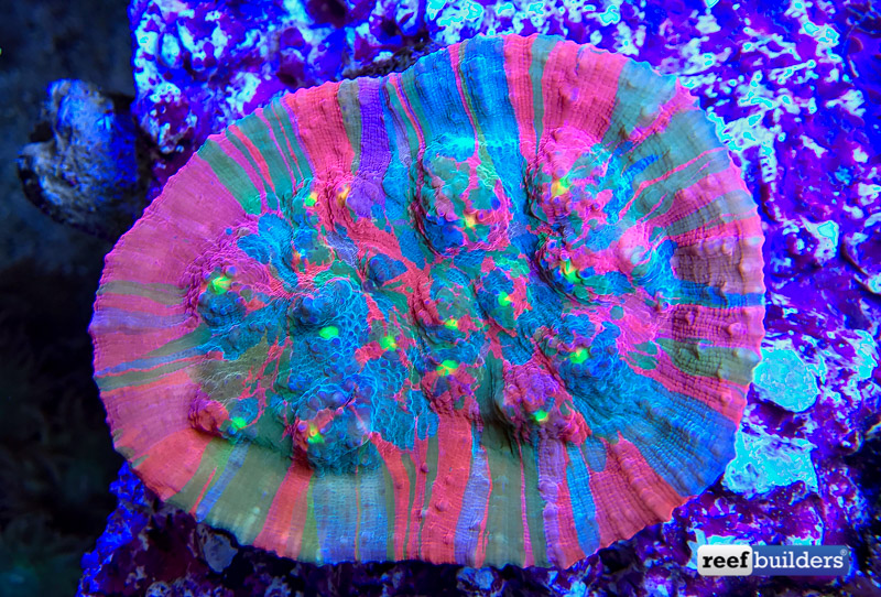 aquatic-art-splatoon-chalice-coral-2.jpg