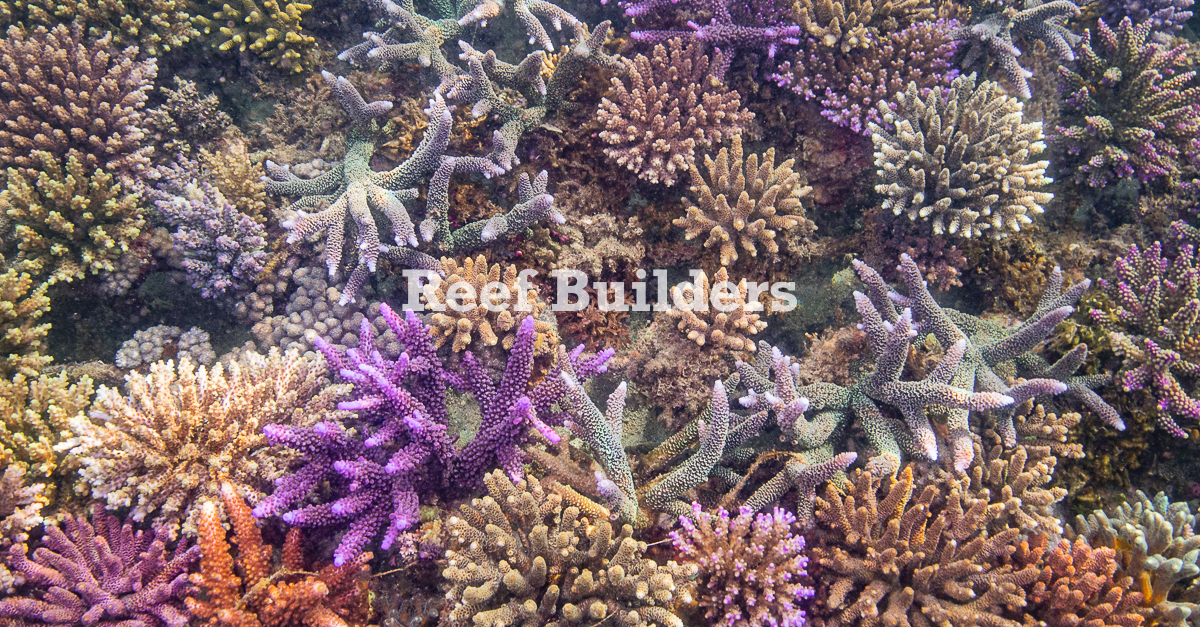 Serangan-Coral-Bali-Aquarium-53.jpg