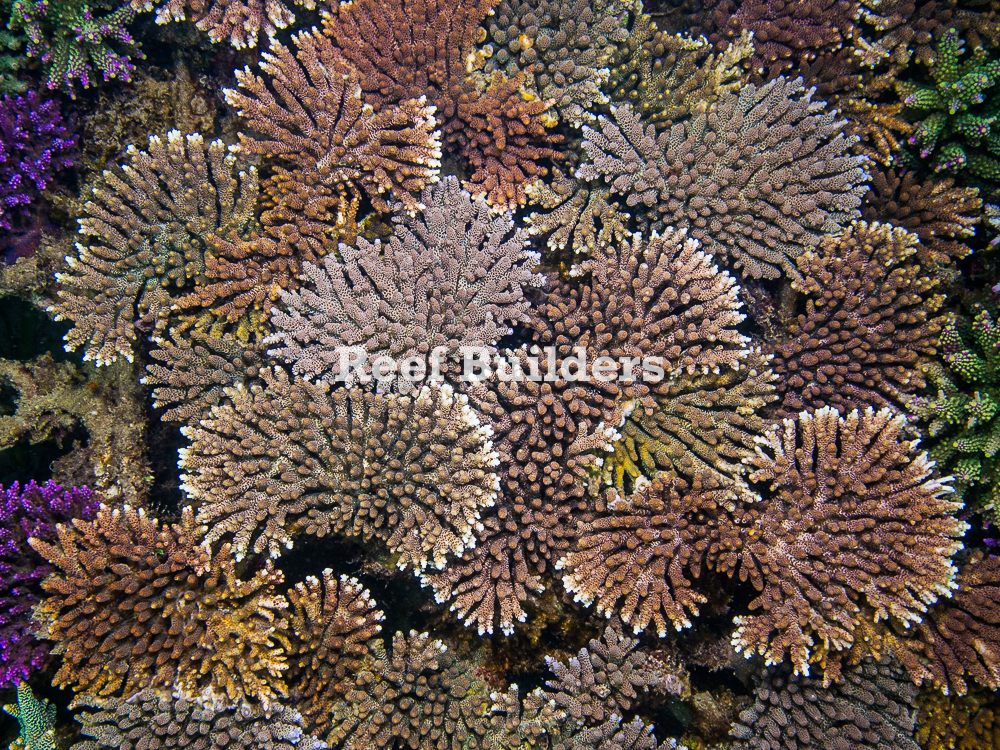 Bali-Coral-Farm-9.jpg