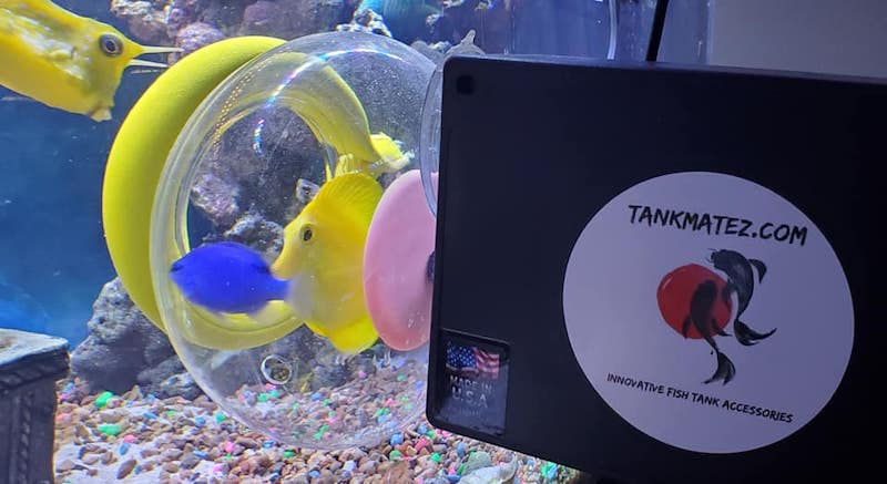 bubble-Fish-Trap.jpg