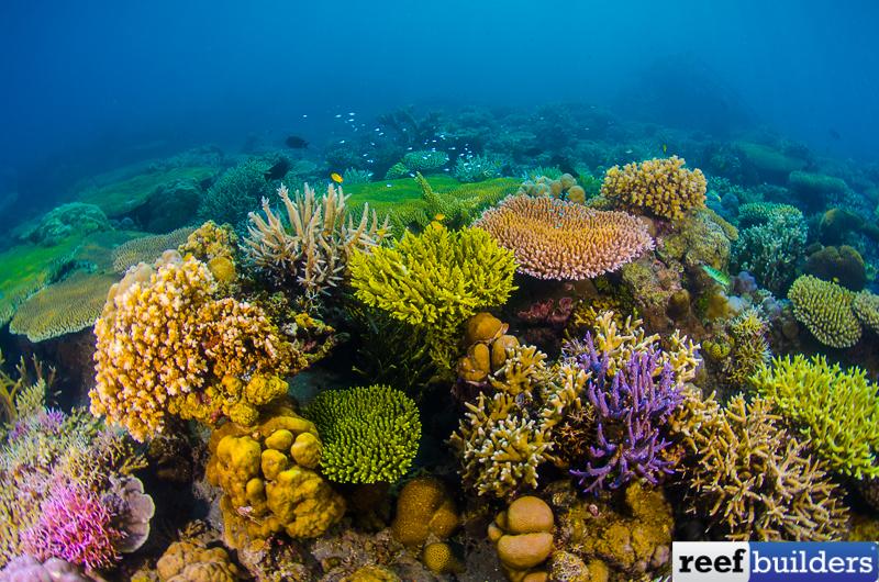 Reef-Scene-8.jpg