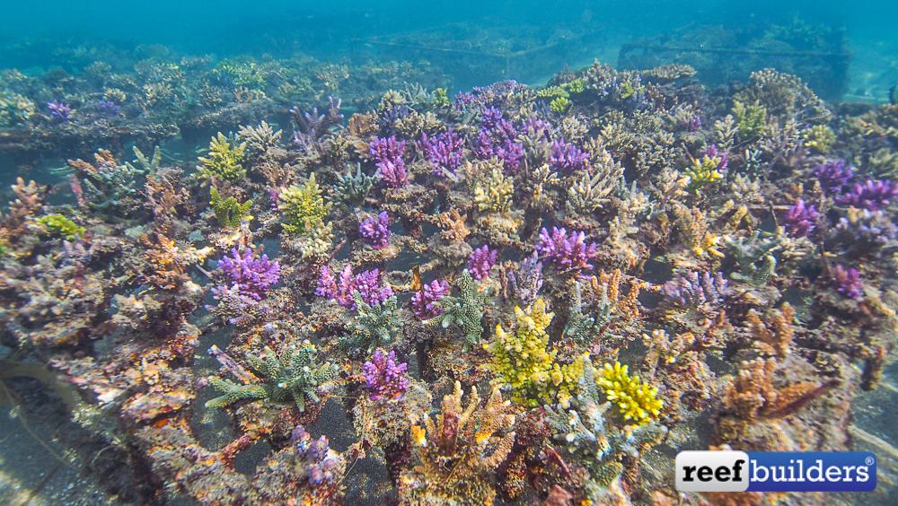 Bali-Coral-Farm-5.jpg