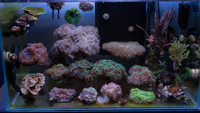 coral-aquarium-jake-adams-1.jpg