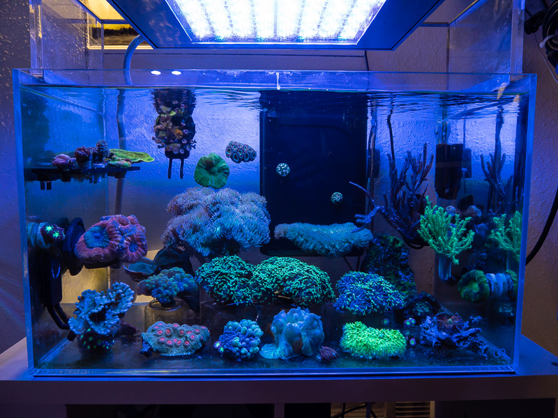 coral-aquarium-jake-adams.jpg