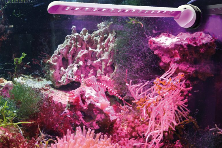 tunze-ecochic-refugium-led-770x513.jpg