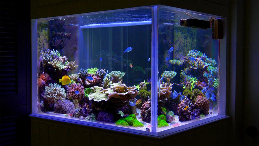 jimmy-wong-reef-sm.jpg
